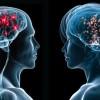 Nörobilim, Kadın ve Erkek Beyni Hakkında Neler Söylüyor?